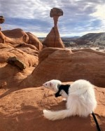 Oliver the hiking ferret has climbed more mountains than you!